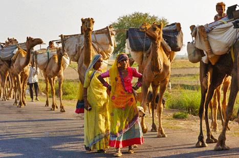 Nomads Of Rajasthan. Rewari Nomads from the Jodhpur
